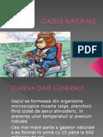 23837332 Gazele Naturale