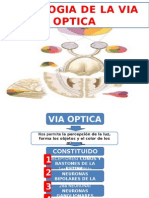 Fisiologia de La via Optica