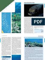 Diving Gt Barrier Reef 2 Swain Pompey v1 m56577569830512321