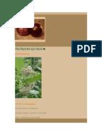 Plante - [ 5 ] Ornament - Asclepias Siriaca