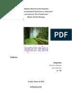 Vegetación de Selva