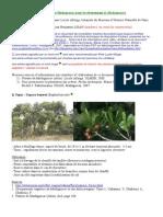 Arbres_de_Madagascar_pour_reboisementArbres de Madagascar Pour Reboisement V2