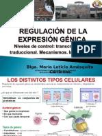 regulación expresiónulas eucariotas transforman la información codificada por los ácidos nucleicos en las p