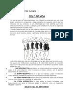Ciclo de Vida del Ser humano.docx