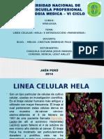 Parvovirus y Hela