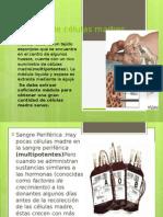 diapos-celulas (1)