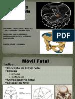 Movil Fetal y Canal Del Parto