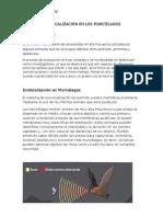 ecolocalizacion en murcielagos.docx