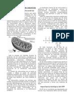 Fosforilación oxidativa - Resumen