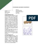 5035-7142 . Antonia Canche  Dzul.ok (3).pdf