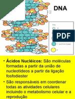 07_acidos nucleicos.ppt