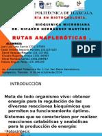 vias anapleroticas