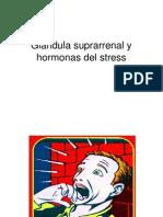 Clase 4 Endocrino Glándula Suprarrenal y Hormonas Del Stress (1)