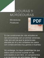 Primeros Auxilios Tema 7. Picaduras y Mordeduras (2)