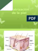 _Cicatrización (1)