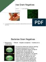 Bacterias Gram Negativas.pptx