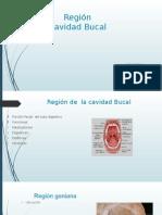 Region Cavidad Bucal