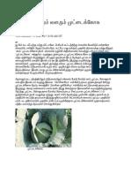 சமவெளியிலும் வளரும் முட்டைக்கோசு