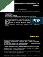 Fitop-clase 4-Enfermedades causadas por hongos.ppt