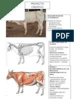 Anatomía Comparada Vaca