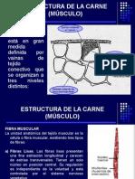 2.Estructura de La Carne (Músculo)