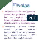 kuliah-4-fermentasilengkap1