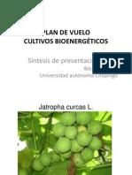 Cultivos Bioenergeticos Propouestos Por Sagarpa