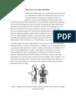 Marco Teórico Anato y Biomeca Lumbar columna