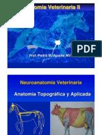 medula espinal 2010