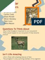 biology period 2, peninsular pronghorn,docs