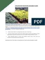 Brokoli Hias Daun Kuning Tanaman Hias Border Perawatan Mudah