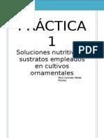Práctica 1 (1) (1)