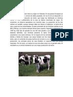 Holstein, yersey, brahman