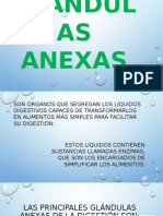 Glándulas Anexas