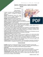 20. Sistema Digestório – Glândulas Anexas – Fígado e Vesícula Biliar