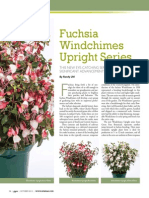 Fuchsia Upright Series