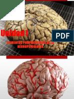 La Biopsicologia y Otras Disciplinas de La Neurociencia