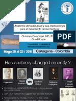 Anatomy Distal Radius