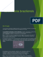 Leishmania Brazilensis
