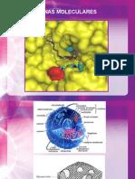 1. FQ I Dianas Moleculares 2014 1
