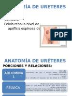 Anatomia de Ureteres