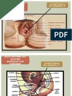 Cavidad Organica Vagina.pptx