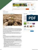 Bioestimulantes, Uso y Composición _ Agroterra Blog