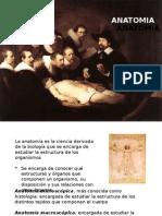 Anatomia - Copia