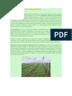 Importancia de los Invernaderos.docx