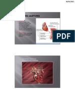 Anatomi Kardiovaskuler Hp Copy