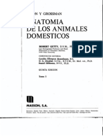 Anatomia de Los Animales Domesticos - Tomo 1