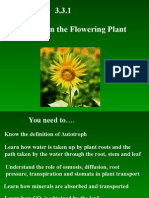 3 3 1 nutrition in the flowering plant