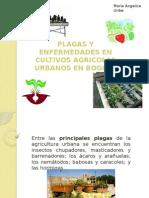 Plagas y Enfermedaes Agro-urbanas