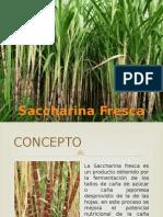 Presentación de Saccharina